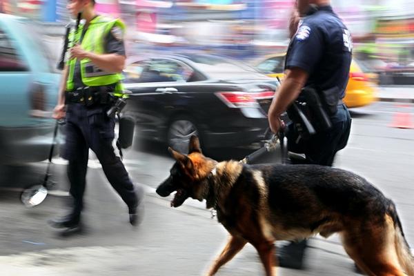 ARMA Sécurité Gardiennage - Prévention chien démineur