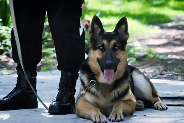 ARMA Sécurité Gardiennage - Prévention